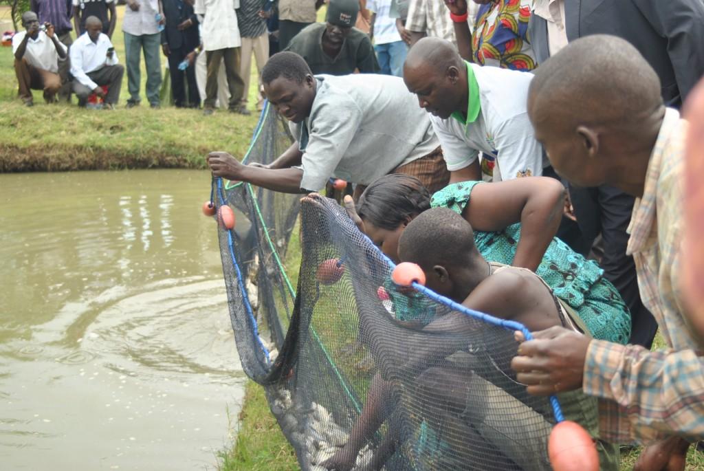 www.africanpress.me/ Fish harvesting demonstration in Kolwa Sub-location, Kisumu County. (photo by Mr Alal)